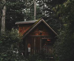 forest, cabin, and tumblr image