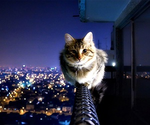 cats! image