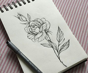 drawing, art, and rose image