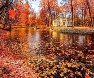 autumn, awesome, and fall image