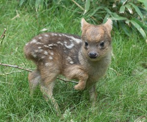 animal, fawn, and cute image
