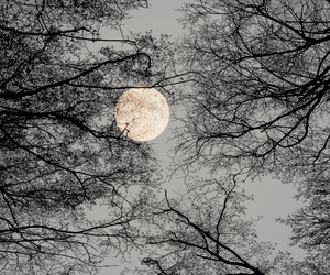 moon, tree, and nature image