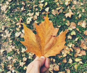 autumn, cold, and hand image