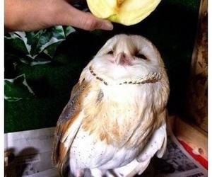 owl, apple, and animal image