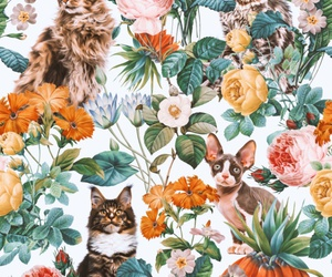flowers, cat, and pattern image