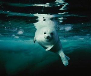 seal, animal, and photography image