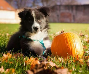 autumn, dog, and october image