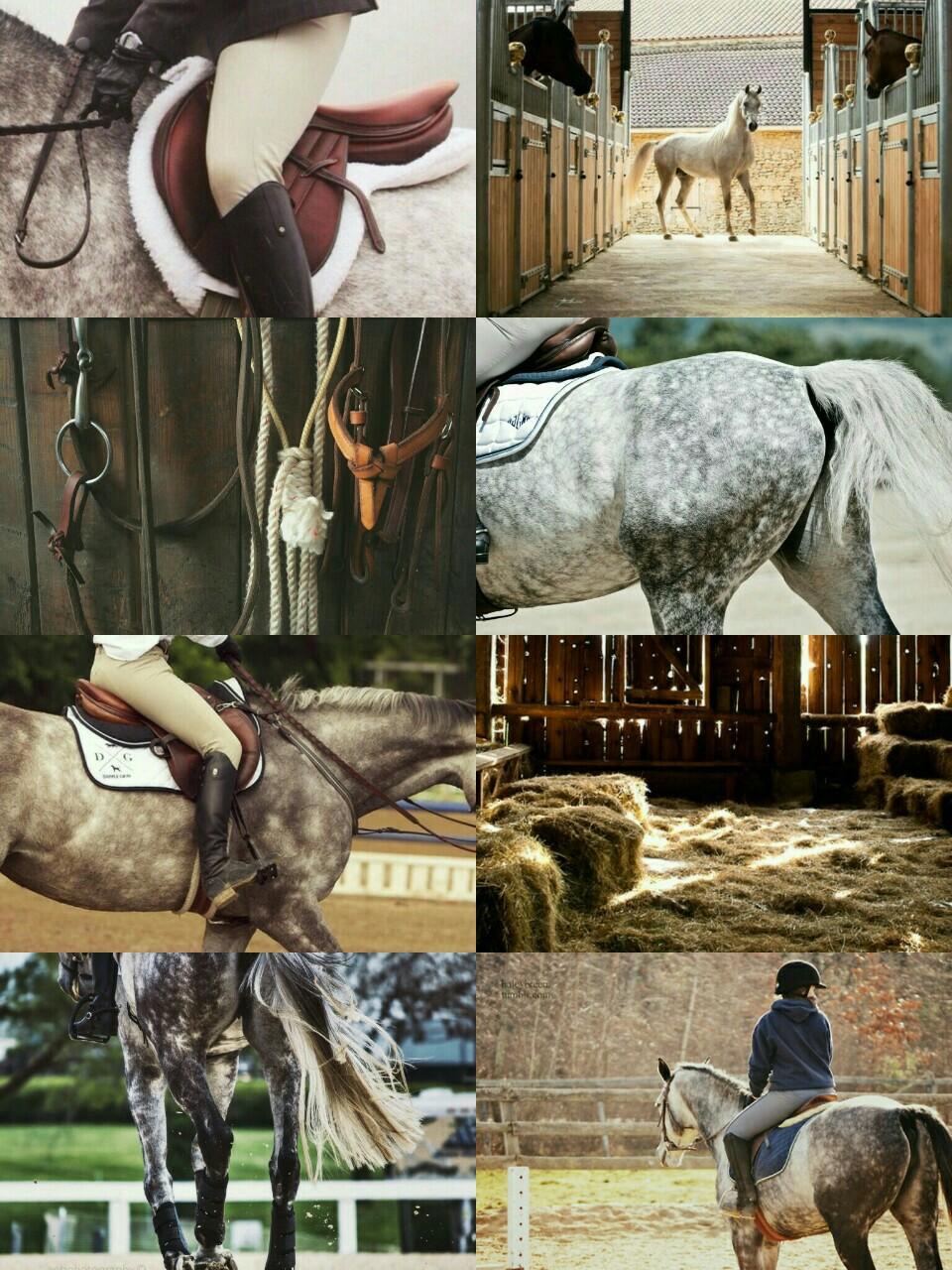 Dapple Grey Aesthetic Equestrian Cute Horses Horses