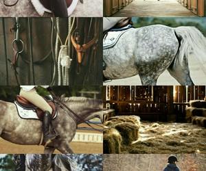 equestrian, fantasy, and magic image