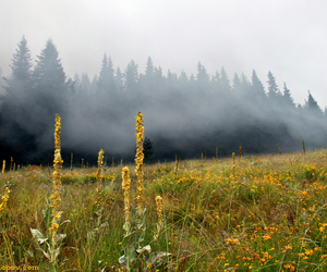 August, fog, and yellow image