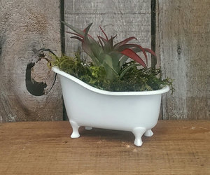 clawfoot tub, air plants, and etsy image