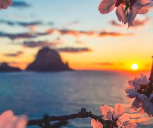 flowers, sunset, and sea image