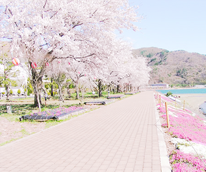 flowers, aesthetic, and cherry blossom image