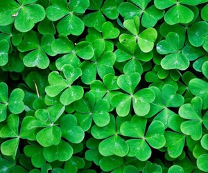 green, clover, and wallpaper image