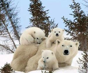 animal, Polar Bear, and bear image