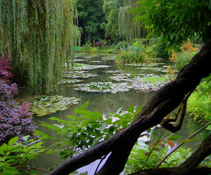 nature, pond, and garden image
