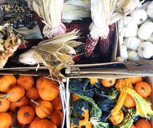 fall, gourds, and pumpkin image