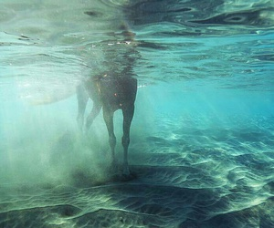 horse, legs, and water image