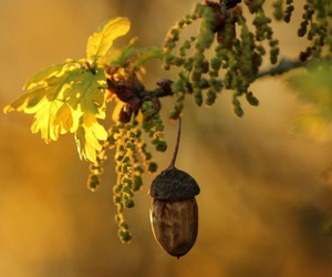 nature beauty image