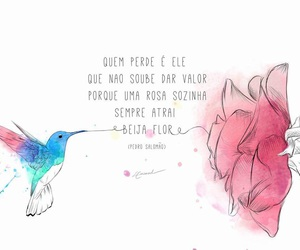 beija-flor, hummingbird, and poesia image
