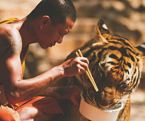 tiger, animal, and nature image