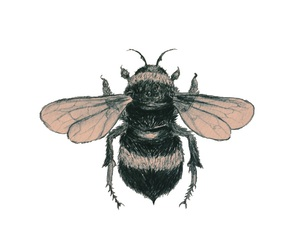 overlay, bee, and transparent image