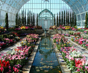 flowers, garden, and aesthetic image