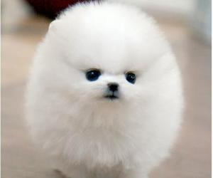 dog, white, and puppy image
