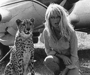 cheetah and vintage image