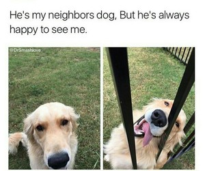 dog, quotes, and dogs image