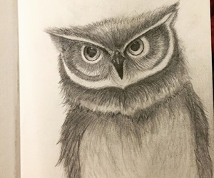 art, owl, and pencil drawing image