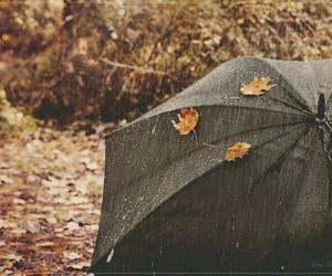 autumn, leaves, and rain image