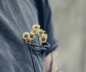 flowers, daisy, and grunge image