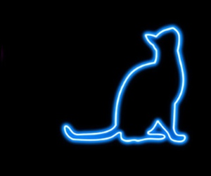 cat, wallpapers, and backgrounds image