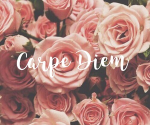 carpe diem, flowers, and pink image