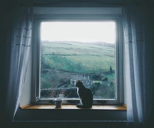 cat, window, and coffee image