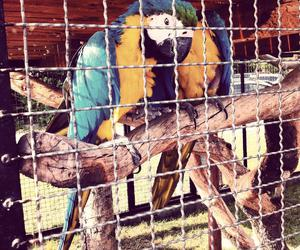 animals, birds, and colorful image