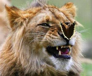 animals, fun, and butterfly image
