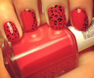 animal, leopard, and nail image
