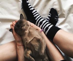 animals, gato, and socks image