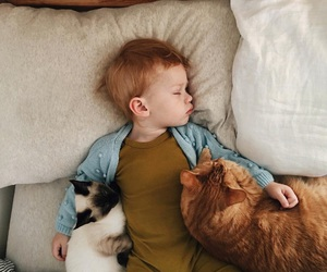 animal, baby, and cat image