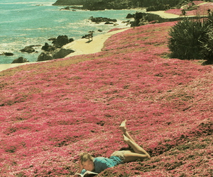 pink, flowers, and reading image