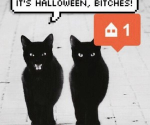 Halloween, cat, and black image