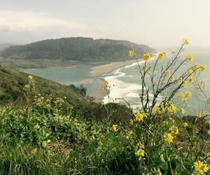 beach, wanderlust, and flowers image