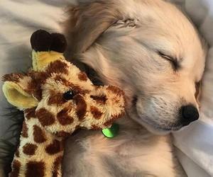 dog, golden, and night image