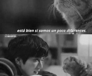 frase, imaginary cat, and mini drama image