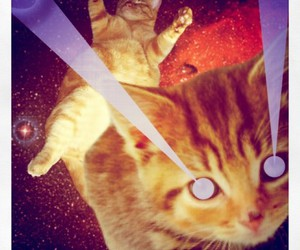 cats, lazer, and crazy eyes image