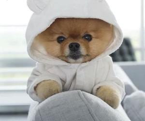 dog, sweet, and teddy image