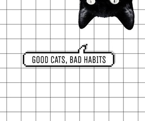 black, cats, and grid image