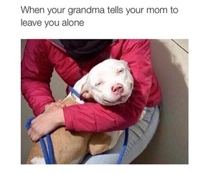 funny, dog, and grandma image